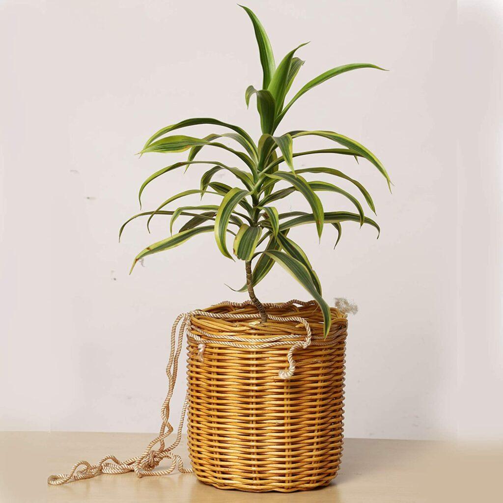 akway planter